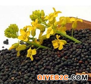 油菜籽进口报关怎么操作 如何进口油菜籽到国内