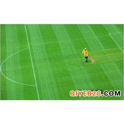 足球场笼式仿真草皮一般多少钱一平方