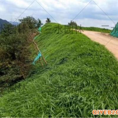 益阳低价批发矿山高速边坡绿化草籽