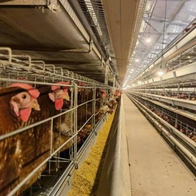 大品牌中州牧业养鸡设备 智能化鸡笼生产