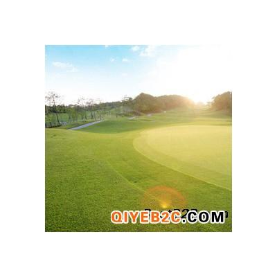 上海草坪哥学校操场人造草坪足球场草坪