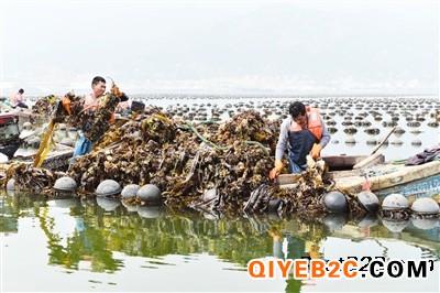 海参养殖场抵押价值评估